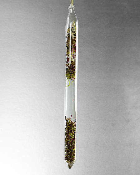 LBK Studio Encapsulation X (Dried Moss)