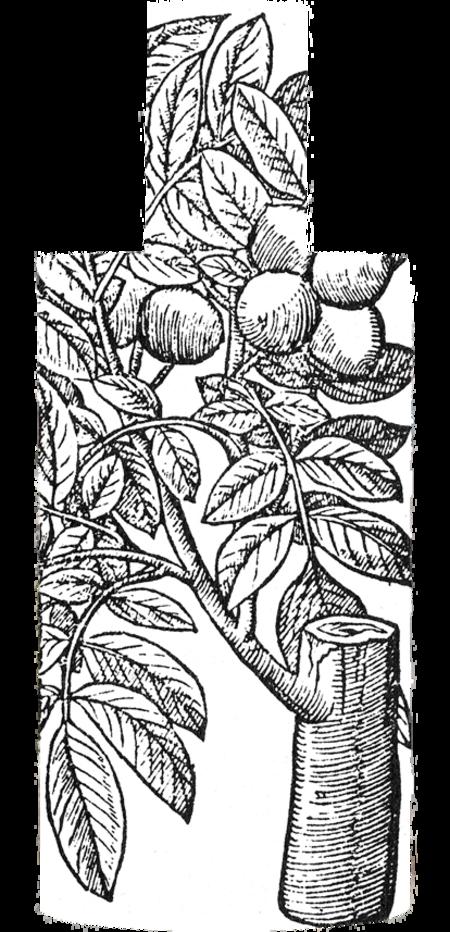 D.S. & Durga Italian Citrus Eau de Toilette