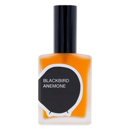 Blackbird Anemone