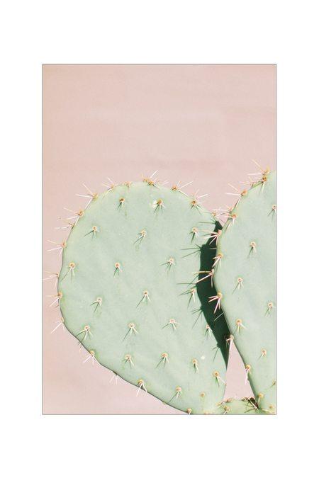 LOFT CREATIVE cactus print no. 16
