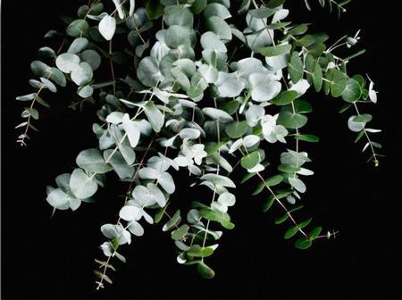 SOOuk Eucalyptus Print