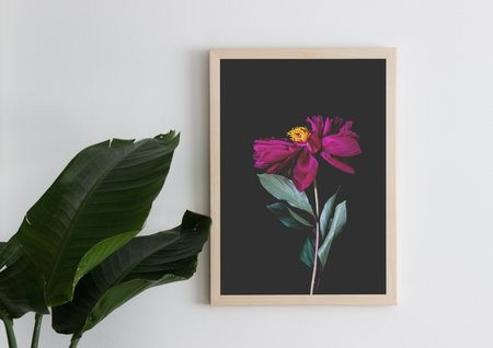 Just South West Blume Art Print