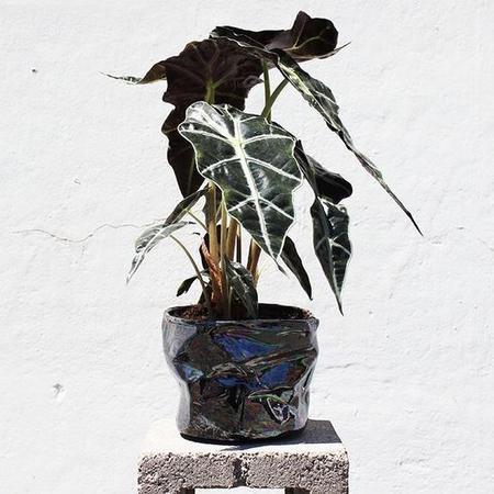 Wyatt Little Wrinkle Pot - Black Oil