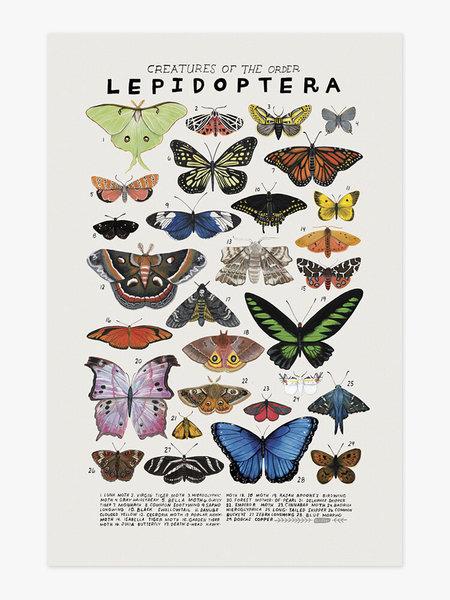 Kelsey Oseid Butterfly Species Poster