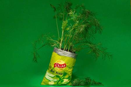 Hello Happy Plants DILL PICKLE CHIPS PLANTER - GREEN