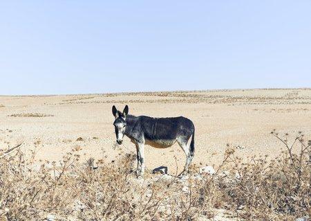 Zico O'Neill Donkey Jordan 2013