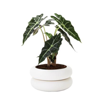 Areaware Stacking Planter - white