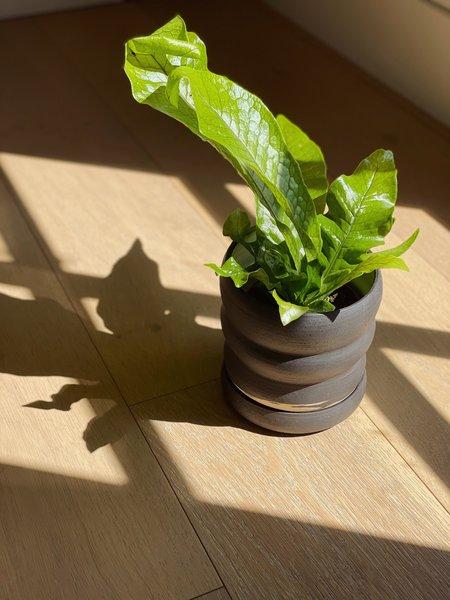 Salamat Ceramics Tombolo Planter