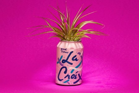 Hello Happy Plants LA CROIX BERRY PLANTER