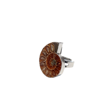 Serendipitous Project Ammonite Ring - Sterling Silver