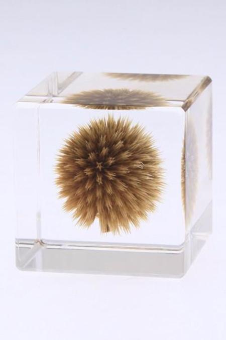 Usagi No Nedoko Sola Cube - Globe Thistle